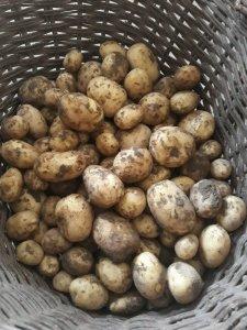 Ziemniaki Colombo