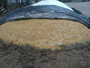 Pryzma kukurydzy