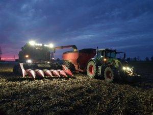 Żniwa kukurydziane-zakończenie