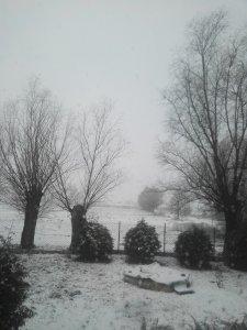 Zima w ogrodzie 2020