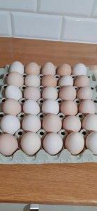 Wiejskie jajka