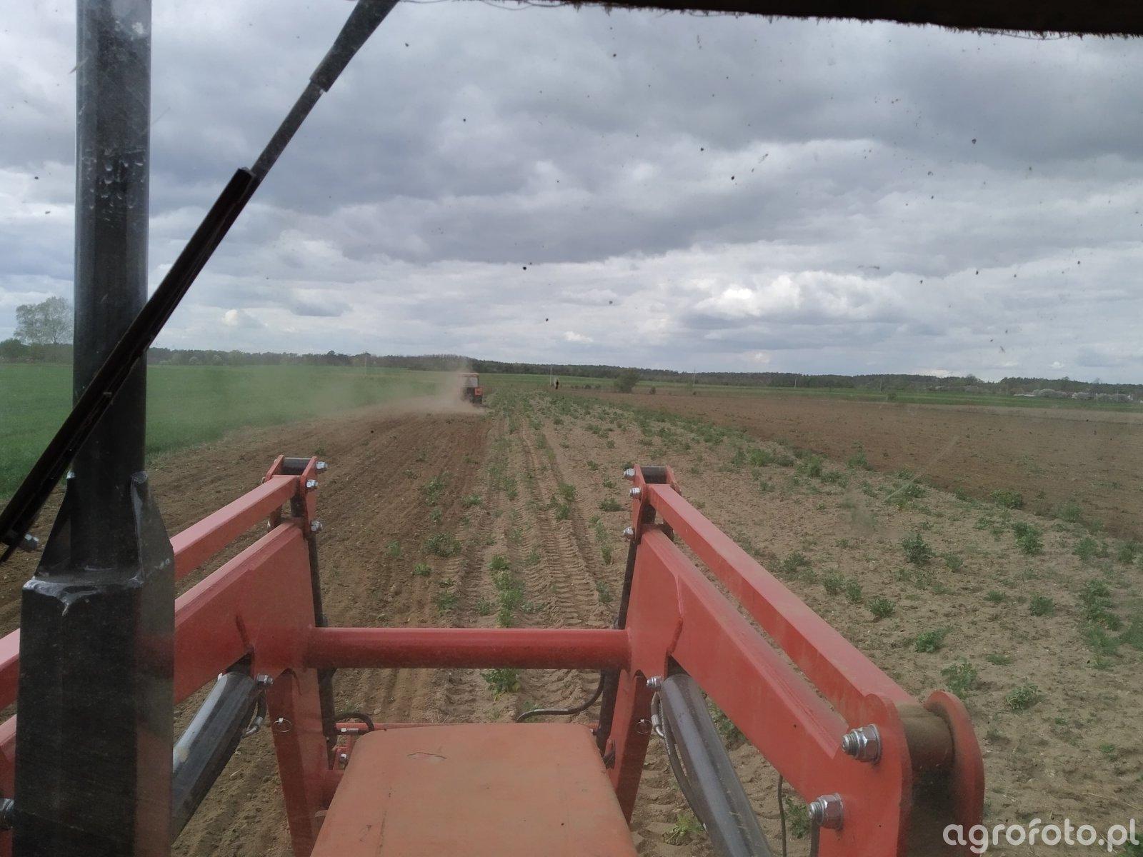 Uprawa pod kukurydzę