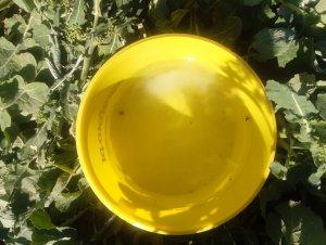 żółte naczynie 10.04.2020