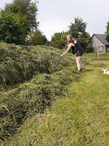 Praca przy pryzmie trawy.