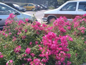 Kwiaty - Lato 2020
