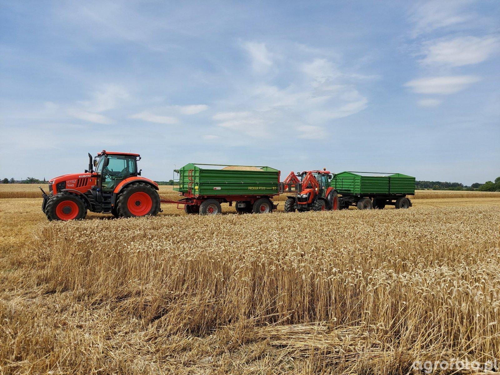 akcja pszenica i poletka