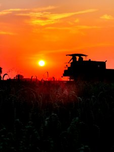 Bizon o zachodzie słońca