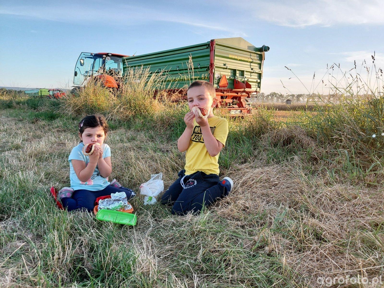 grillowana kiełbaska w polu