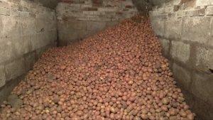 Piwnica - ziemniaki 🥔