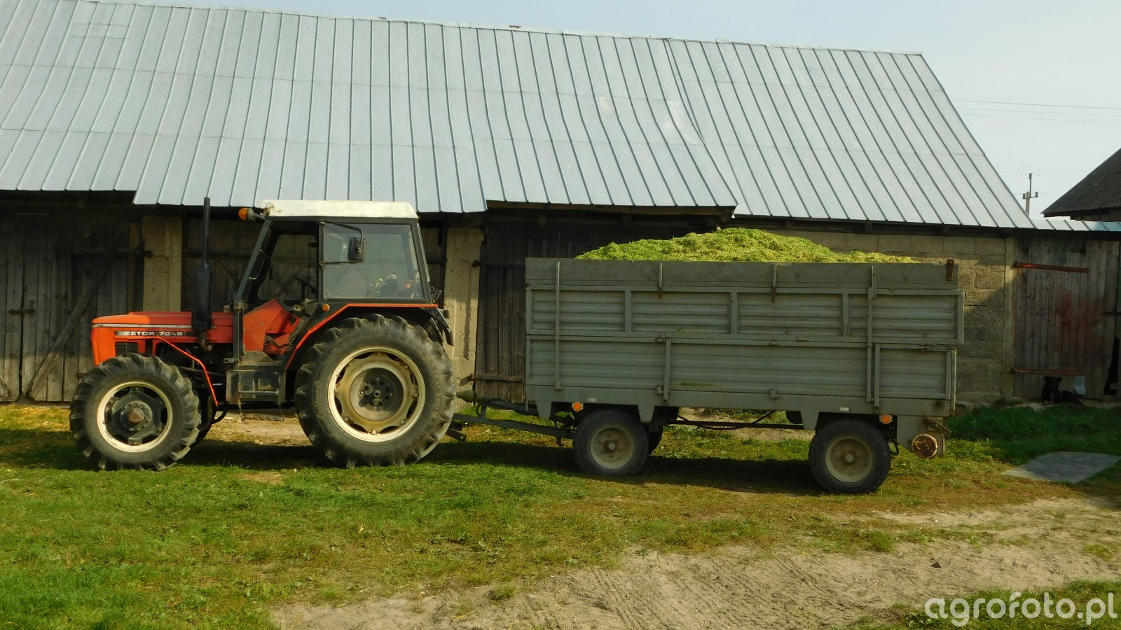 Zetor 7045 i rozrzutnik obornika Czarna Białostocka