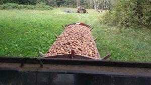 Ziemniaki 🥔