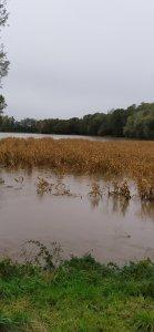 Woda na polu kukurydzy
