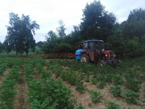 Oprysk ziemniaków C-330M+Biardzki 800l