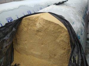 Kiszone ziarno kukurydzy