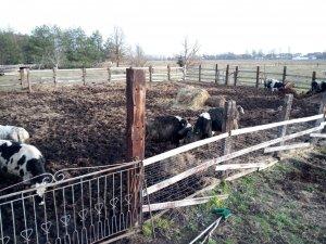 Wybieg dla bydła